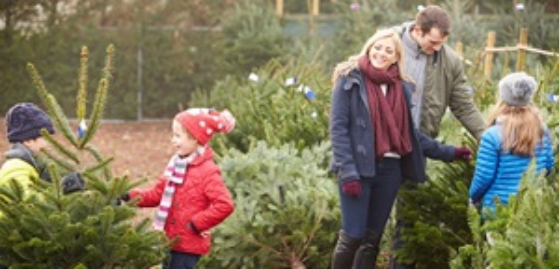 family choosing christmas tree