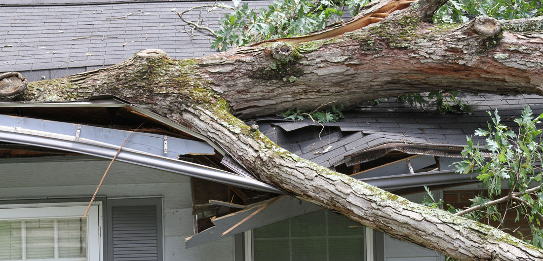 tree falling on home