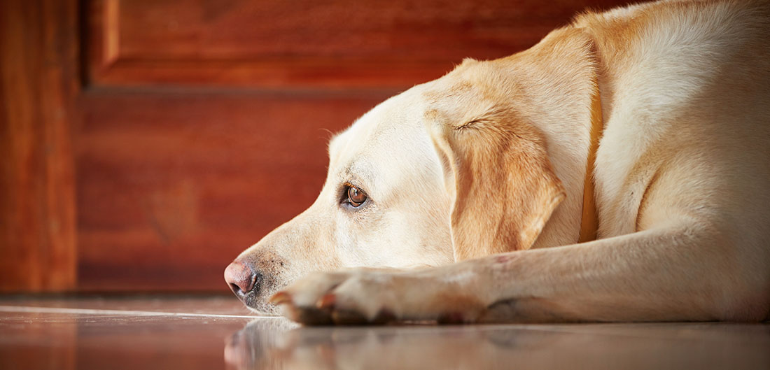 Pet Protection Tips To Weather A Natural Disaster