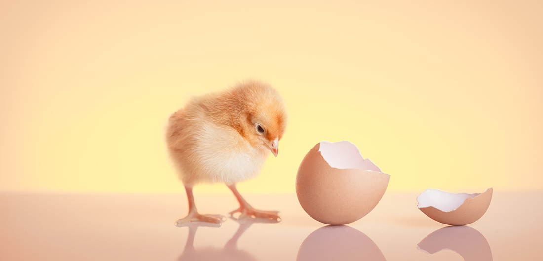 chick next to broken egg shell