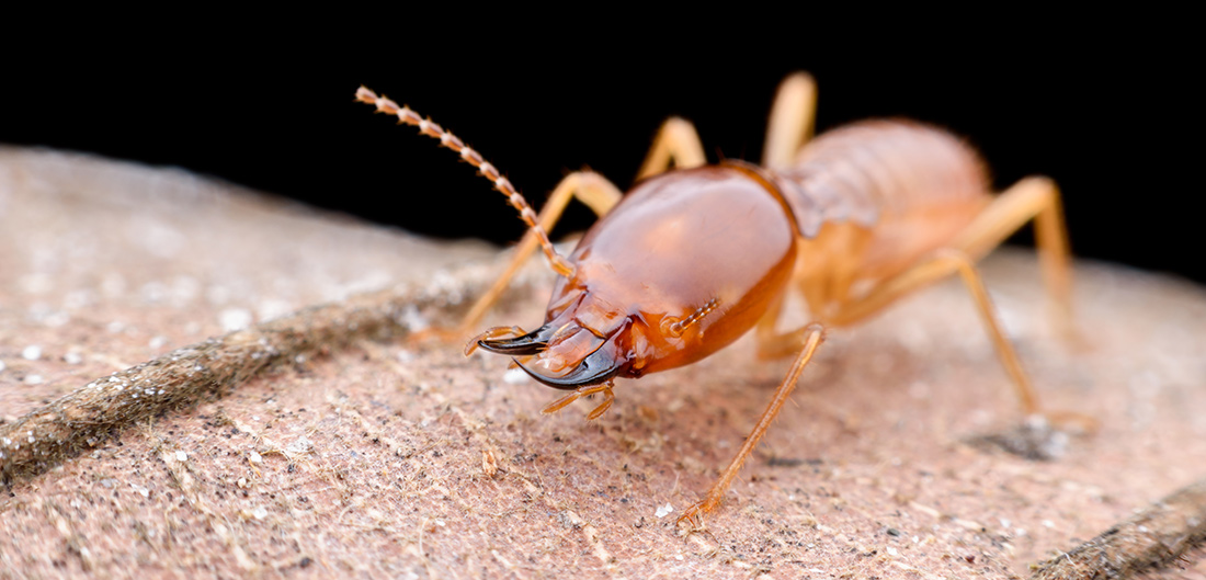 a close up of an insect