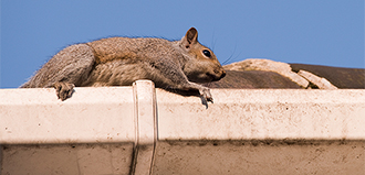squirrel is perched on top of gutter