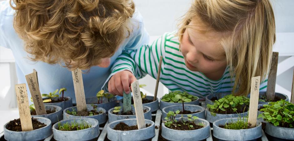 young children examine seedlings in pots
